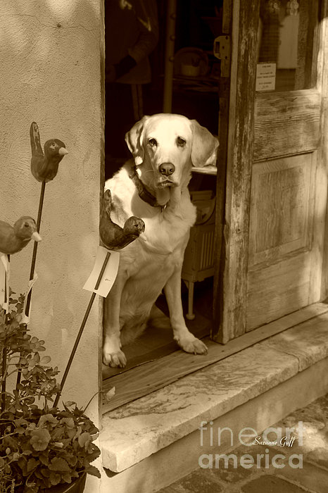 Charleston Shop Dog In Sepia Print by Suzanne Gaff
