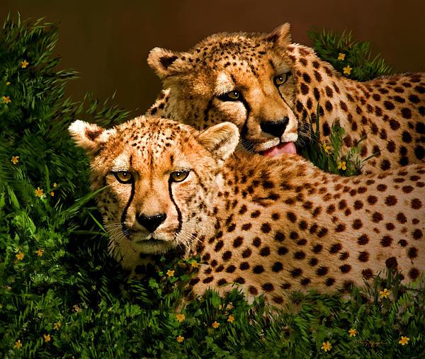 Cheetahs  Print by Thanh Thuy Nguyen