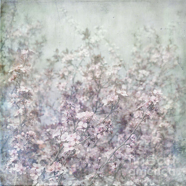 Cherry Blossom Grunge Print by Paul Grand