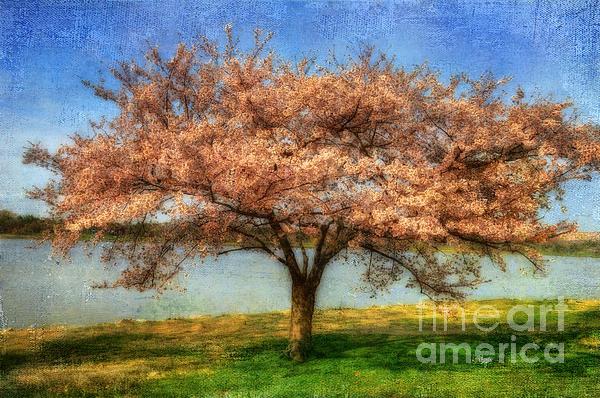 Lois Bryan - Cherry Tree