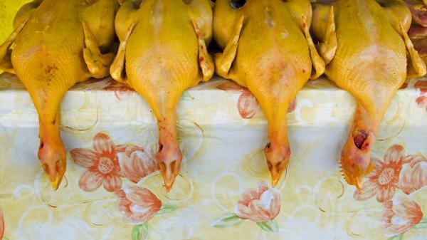 Chicken Train Print by Skip Hunt
