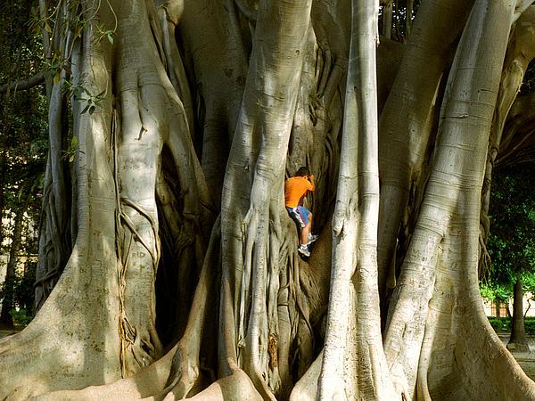 P S - Child in Tree