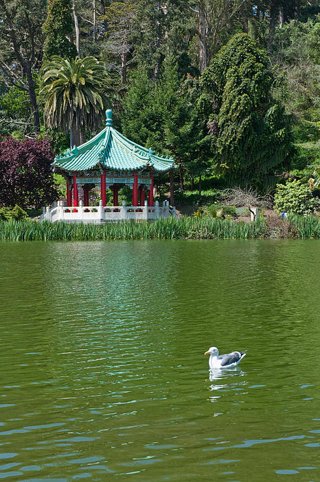 Chinese Water Garden By Tom Dowd
