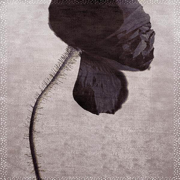 Chocolate Poppy Print by Bonnie Bruno