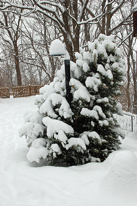 Christmas Tree Print by Aimee L Maher Photography and Art