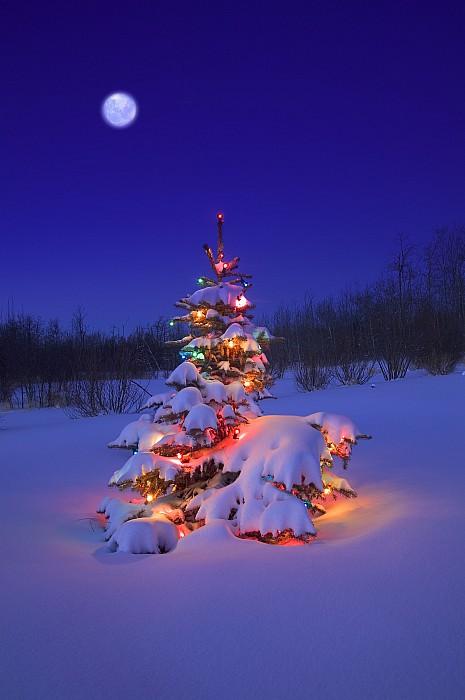 Christmas Tree Glowing Print by Carson Ganci