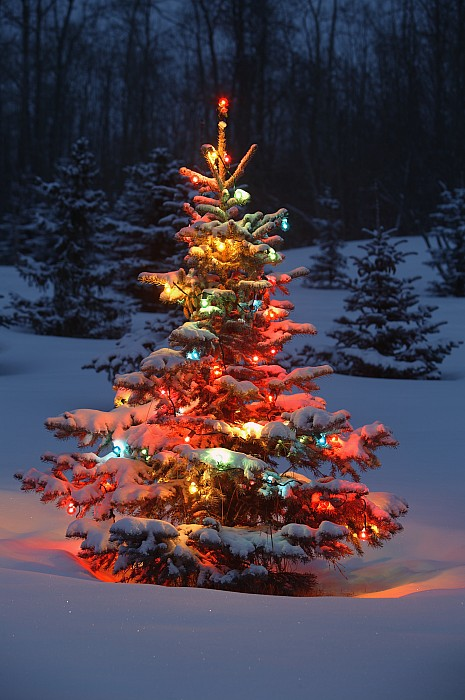 Christmas Tree With Lights Outdoors In Print by Carson Ganci