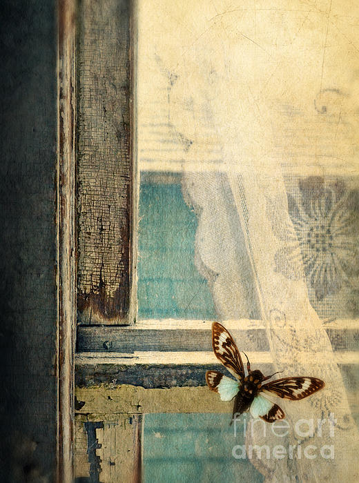Jill Battaglia - Cicada on Window