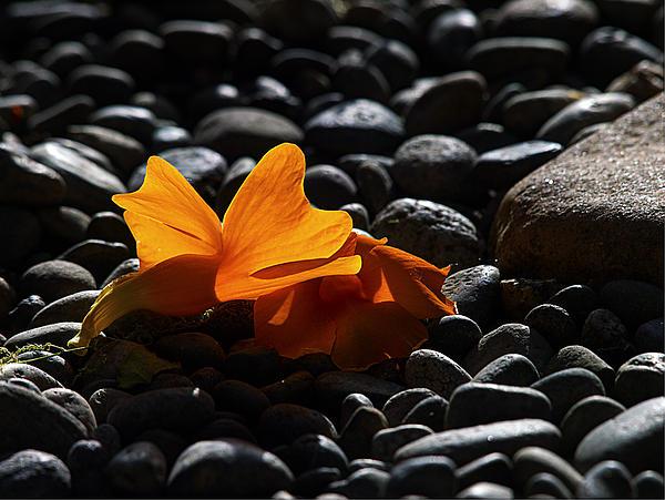 Joe Schofield - Clockvine Blossom 051012