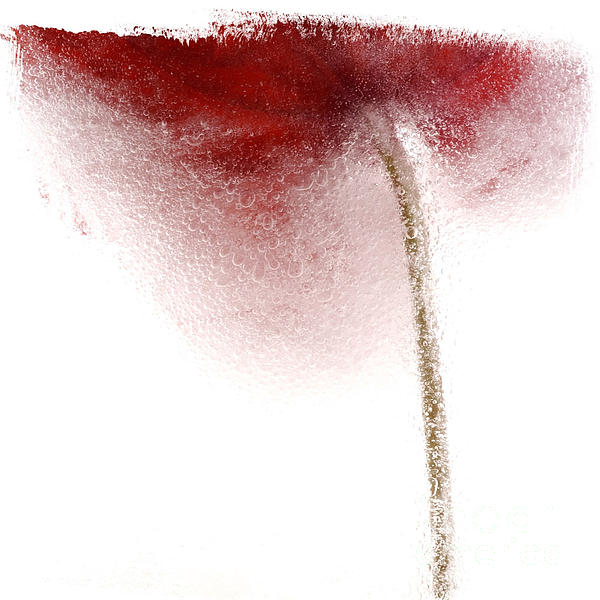 Close-up Of Droplets Of Water On A Tulip Print by Bernard Jaubert
