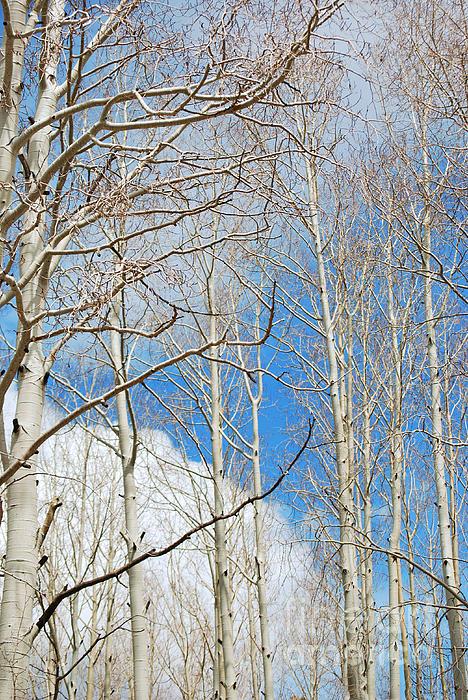 Donna Van Vlack - Cloudy Aspen Sky