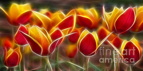 Cluisiana Tulips Fractal Print by Peter Piatt