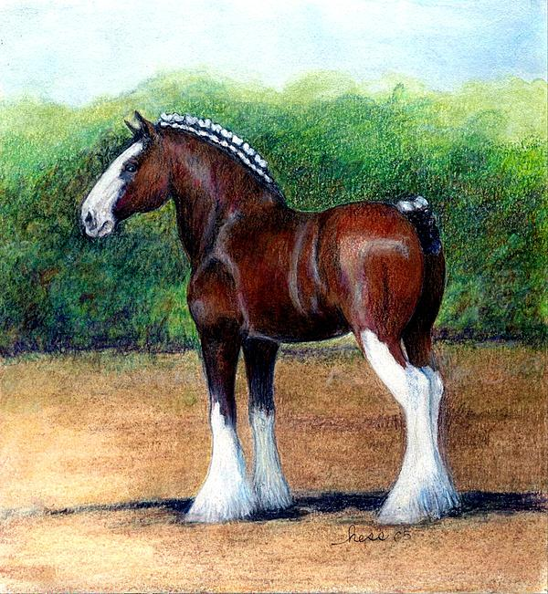 Clydesdale Horse Portrait By Olde Time Mercantile