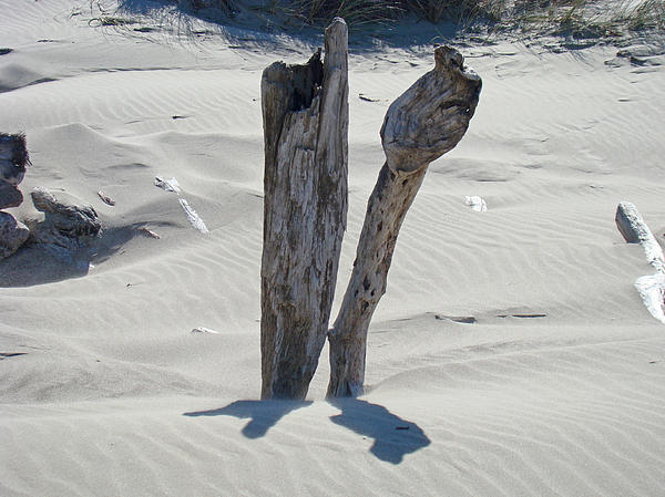 Coastal Driftwood Art Prints Ocean Shore Sand Beach Print by Baslee Troutman Nature Photography