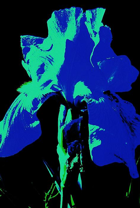 Cobalt Iris Print by Todd Sherlock