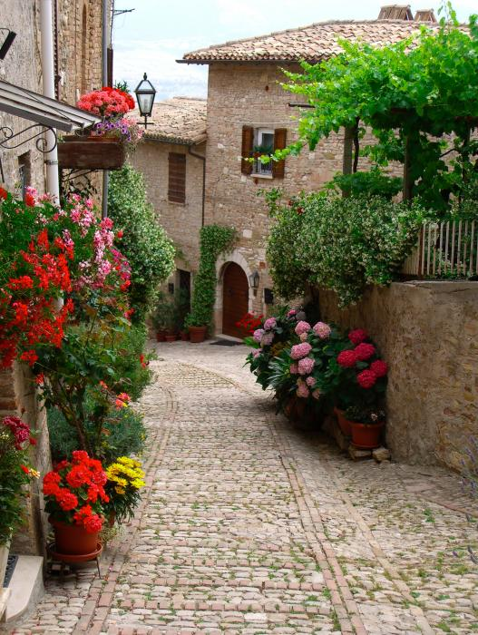 Cobblestone Street With Flowers Photograph  - Cobblestone Street With Flowers Fine Art Print