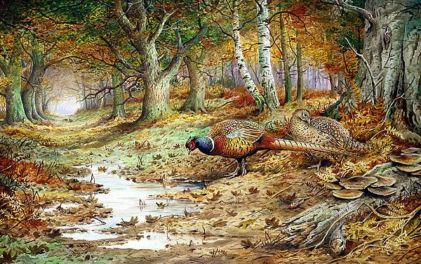 Cock Pheasant And Sulphur Tuft Fungi Print by Carl Donner
