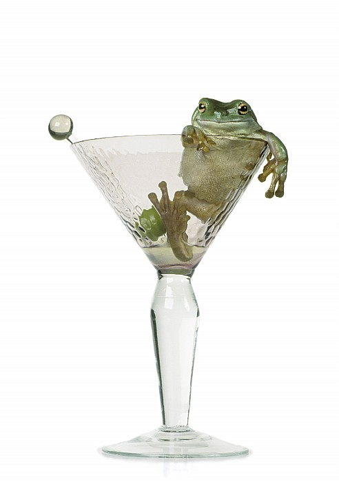Cocktail Frog Print by Darwin Wiggett