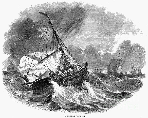 Cod Fishing, 1876 Print by Granger