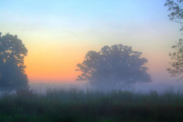Color And Fog Print by Robert Pearson