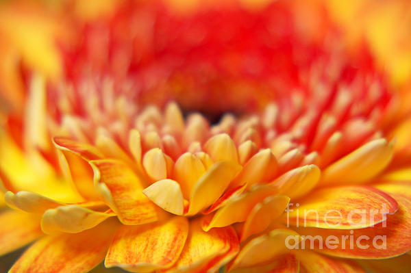 Color Of Summer II Print by Angela Doelling AD DESIGN Photo and PhotoArt