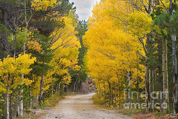 James BO  Insogna - Colorado Autumn Aspen Road Boulder County