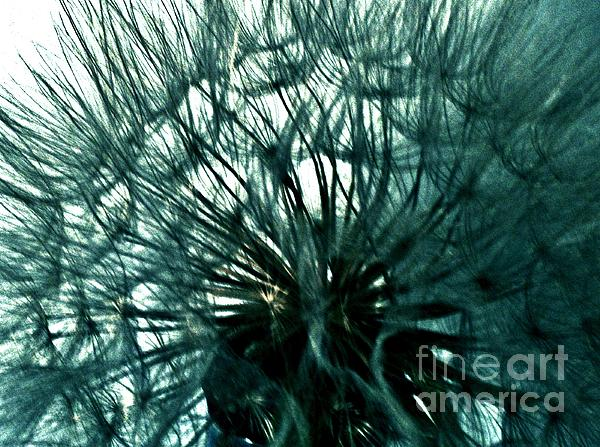 Colored Pod Flower Abstract Print by Marsha Heiken