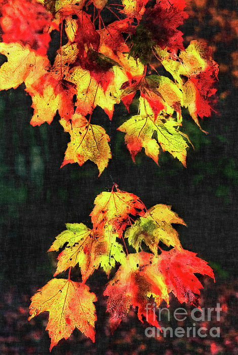 Colorful Autumn Leaves IIi Print by Dan Carmichael