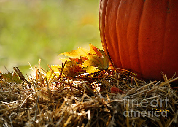 Nava  Thompson - Colorful Autumn