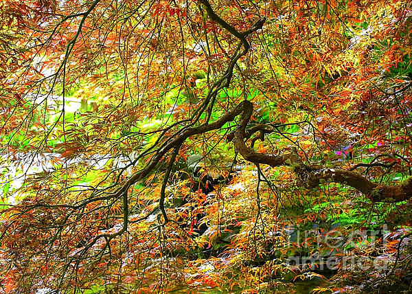 Colorful Maple Leaves Print by Carol Groenen