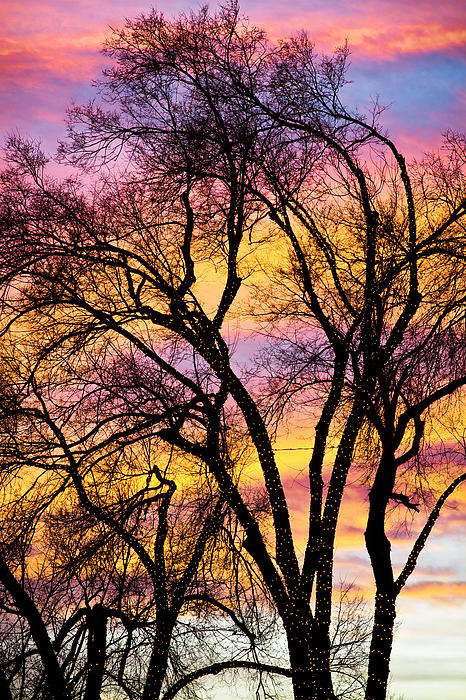 James BO  Insogna - Colorful Silhouetted Trees 13