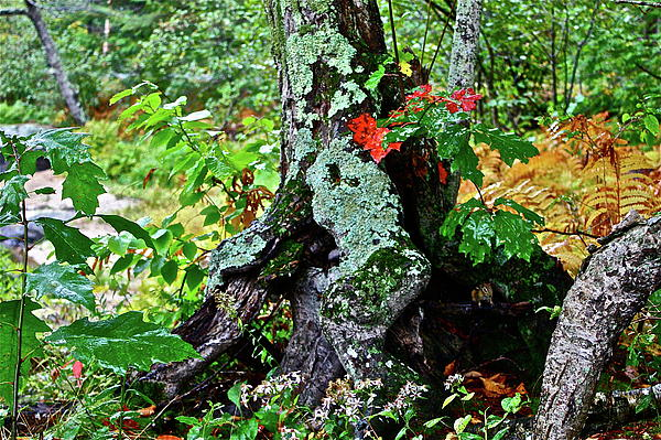 Colorful Stump Print by Diana Hatcher