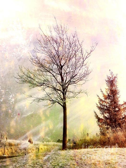 Julie Palencia - Colors of Winter