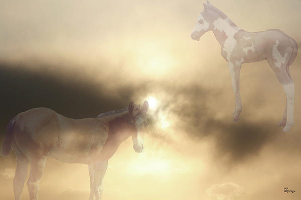 Colts Dreams Photograph