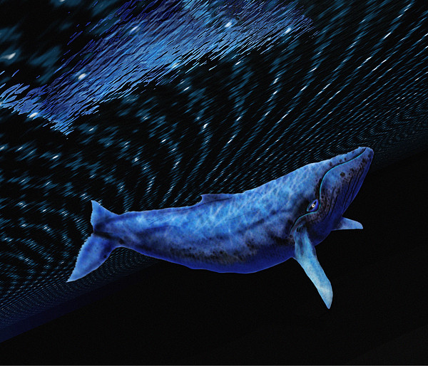 Computer Artwork Of A Humpback Whale Print by Victor Habbick Visions