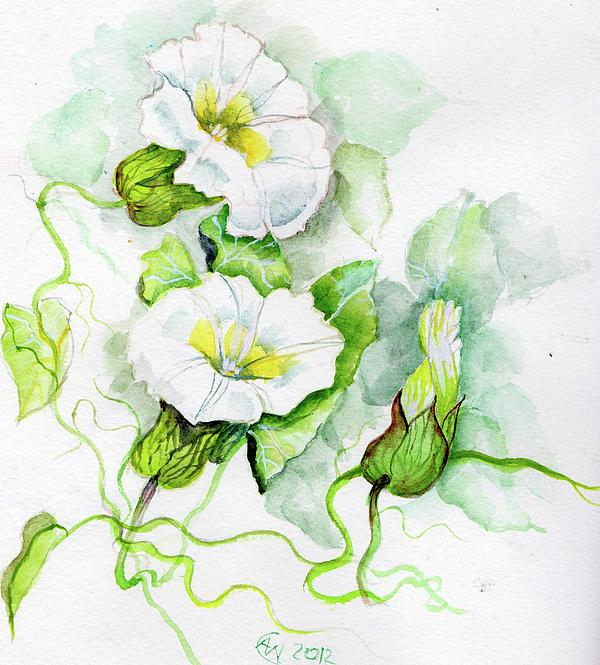 Convolvulus Print by Angelina Whittaker Cook