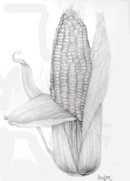 Inger Hutton - Corn on the Cob