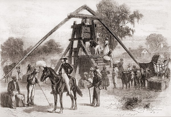 Cotton Press In Operation In The South Print by Everett