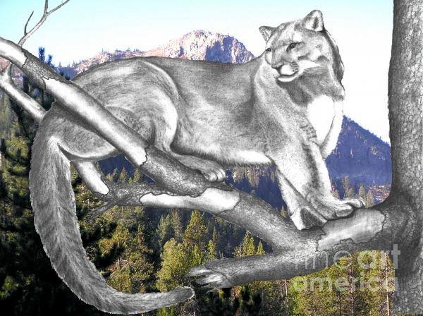 Cougar Mountain Photograph  - Cougar Mountain Fine Art Print