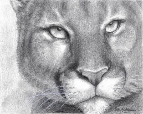 Cougar Spirit Print by Carla Kurt