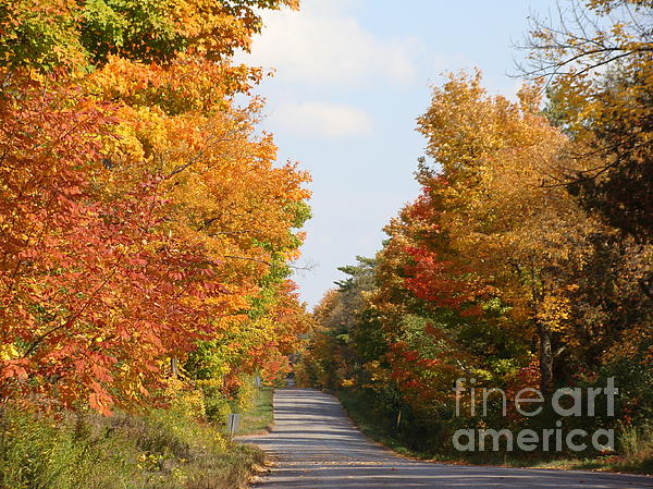Country Road Print by Beverly Livingstone