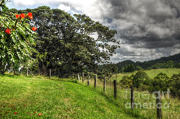 Countryside With Old Fig Tree Print by Kaye Menner
