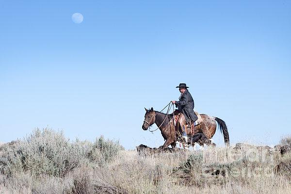Cowboy Desert Moon Print by Cindy Singleton