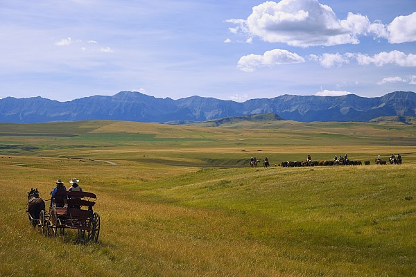 Cowboys And Wagon On A Cattle Drive Print by Carson Ganci