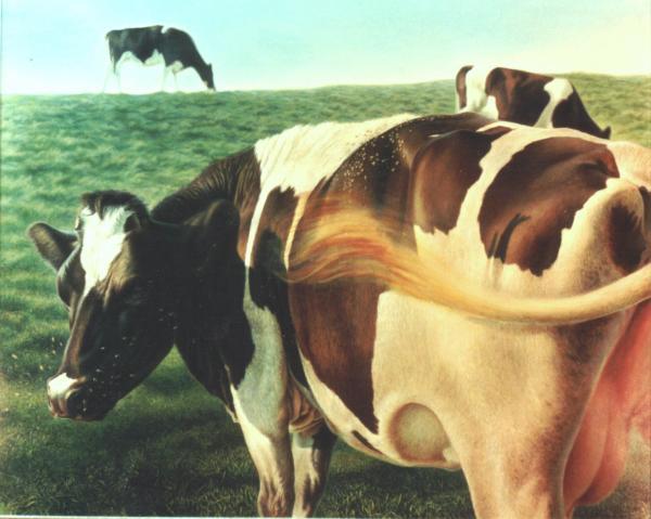 Cows 2 Print by Hans Droog