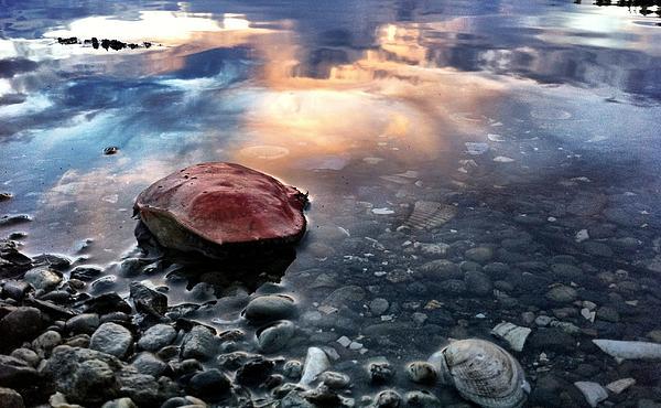 Richelle Wallin - Crab Shell