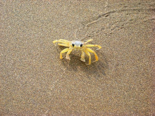 Jamila Francis - Crab stare