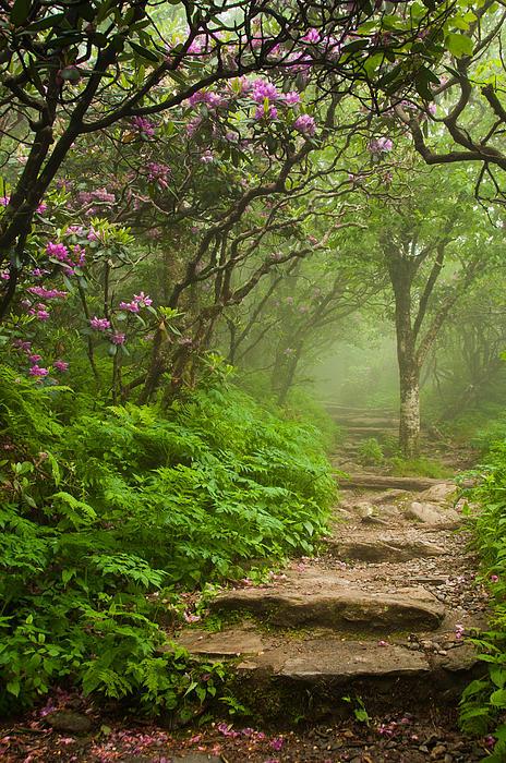 Joye Ardyn Durham - Craggy Steps