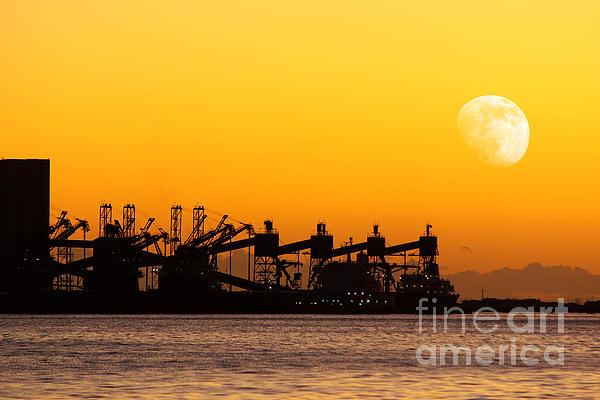Cranes At Sunset Print by Carlos Caetano