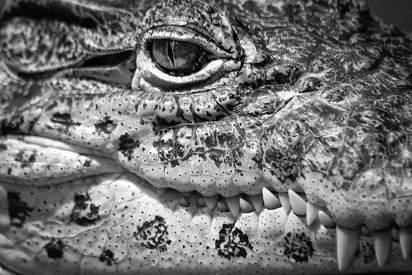 Creepy Crawler Print by James Woody